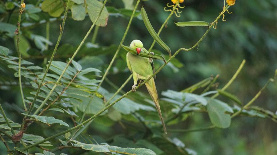 Ayurveda Resort gruener Papagei bei der Villa Raphael