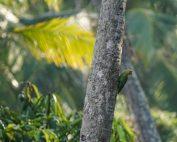 Kur Erfahrungsbericht: Gruener Papagei an Palmenstamm guckt neugierig in die Kamera