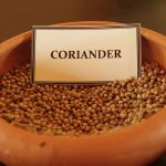 Herbal Demonstration coriander seeds in a clay bowl