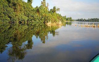 Kajaken entlang der Mangroven