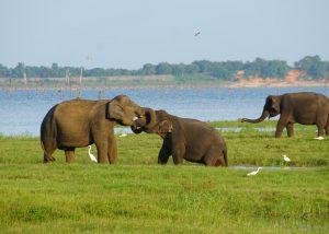 Elefanten vor dem See, bei einer Safari-Tour
